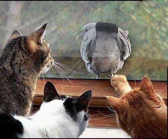 Name:  cat and bird.jpg