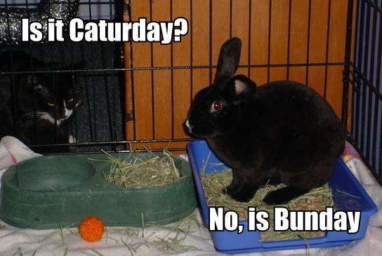 Name:  Bunday1.jpg