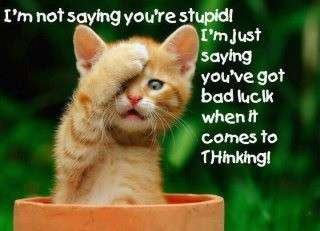Name:  I'm not saying you're stupid....jpg Views: 131 Size:  12.2 KB