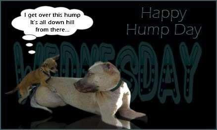 Name:  Hump-Day.jpg Views: 137 Size:  12.7 KB