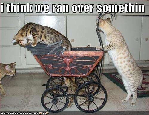 Name:  funny-pictures-cats-baby-carriage.jpg Views: 217 Size:  35.8 KB