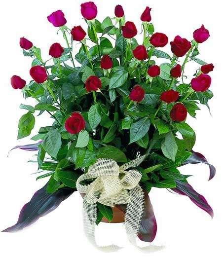 Name:  red_roses.jpg Views: 110 Size:  40.1 KB