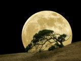 Name:  diane-miller-windswept-live-oak-tree-and-rising-full-moon-at-night[1].jpg Views: 151 Size:  5.6 KB