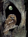 Name:  george-mccarthy-tawny-owl-perched-in-tree-below-nearly-full-moon[1].jpg Views: 178 Size:  14.5 KB