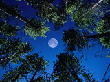 Name:  karl-lehmann-full-moon-and-lodgepole-pines-in-tenmile-range-rocky-mountain-national-park-colorad.jpg Views: 146 Size:  11.8 KB
