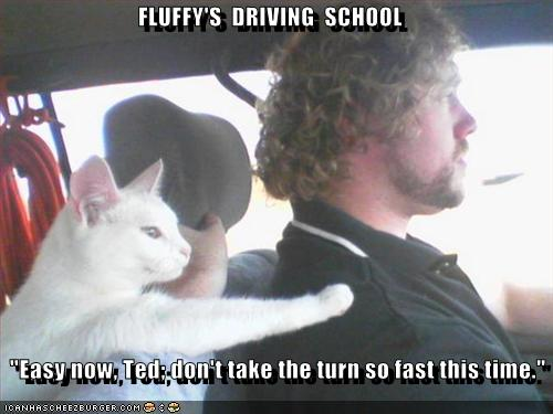 Name:  funny-pictures-cat-teaches-driving-school.jpg Views: 9867 Size:  28.9 KB