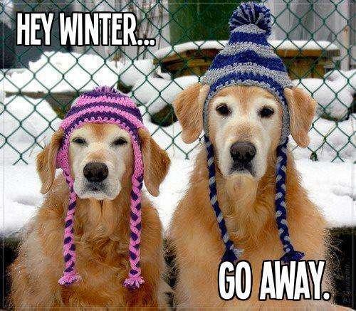 Name:  winter-go-away.jpg Views: 320 Size:  51.4 KB