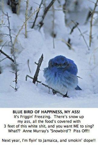 Name:  bluebird hates winter.jpg Views: 561 Size:  41.1 KB