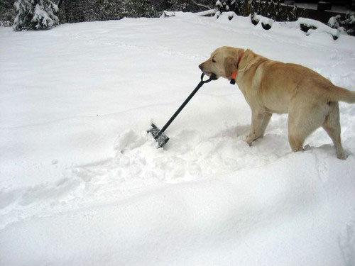 Name:  snow removal doggy.jpg Views: 820 Size:  32.5 KB