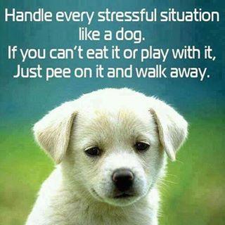 Name:  pee on stress.jpg Views: 252 Size:  20.5 KB
