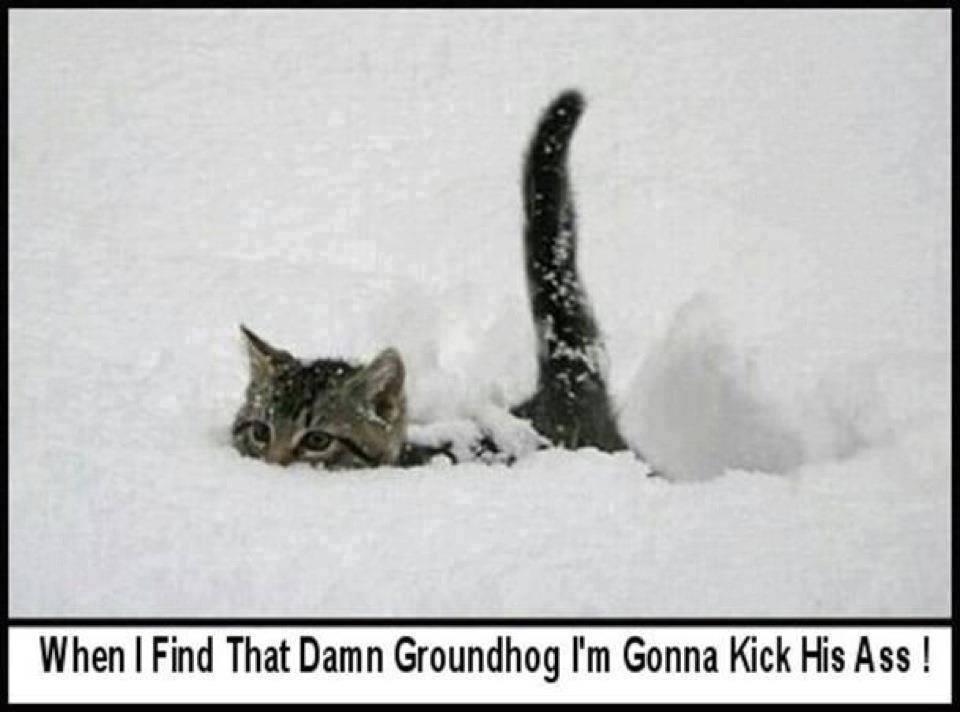Name:  kick ass.jpg Views: 347 Size:  49.8 KB