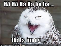 Name:  owl laughing.jpg Views: 250 Size:  11.0 KB