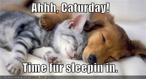Name:  caturdaysleepin.jpg Views: 49 Size:  25.8 KB