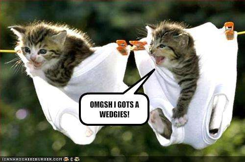 funny kitten pictures. funny cats and kittens.