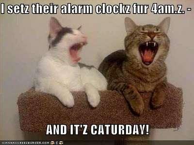 Name:  caturday_alarm.jpg Views: 106 Size:  16.5 KB