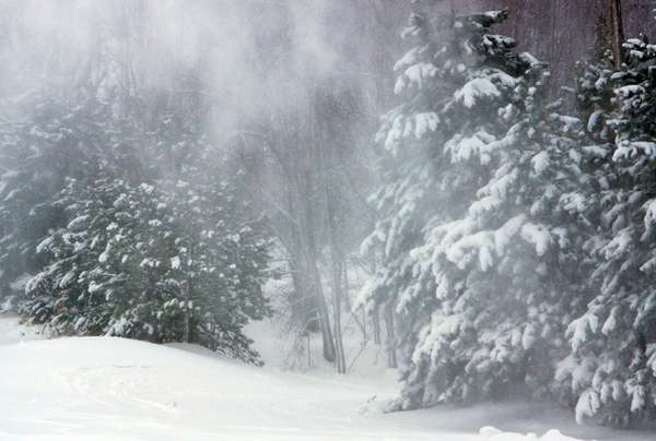 Name:  A Winter Woods 574 [640x480].jpg