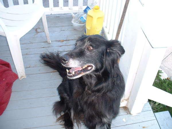 Small Breed Dog Rescue Calgary