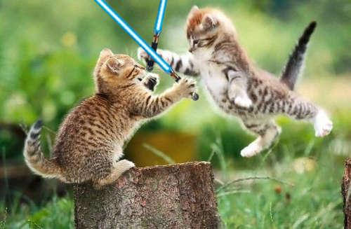 Name:  kittens-lightsaber.jpg Views: 473 Size:  26.4 KB