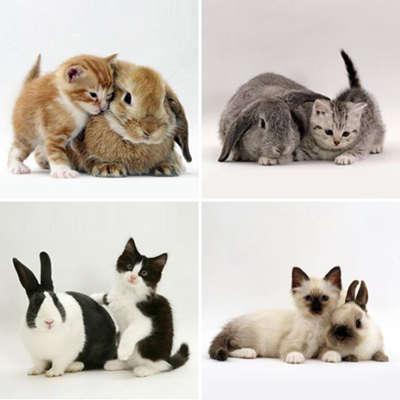 Name:  bunny-kitten-identity-theft.jpg Views: 150 Size:  35.5 KB