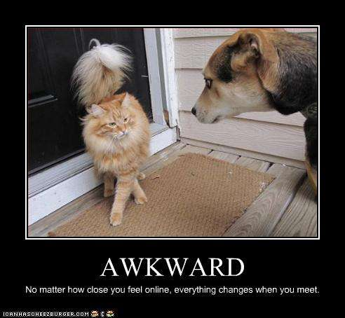 Name:  funny-pictures-cat-and-dog-have-awkward-meeting.jpg Views: 147 Size:  27.4 KB