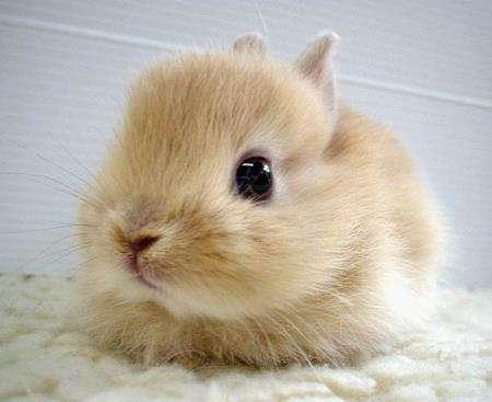 Name:  bunny1.jpg Views: 82 Size:  18.5 KB