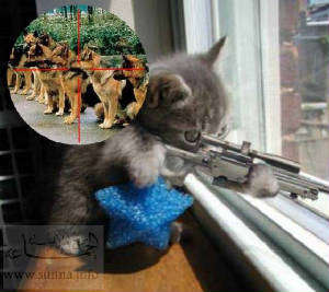 Name:  cat sniper.jpg Views: 84 Size:  16.7 KB