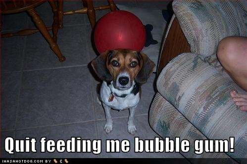 Name:  funny-dog-pictures-dog-asks-you-to-quit-feeding-him-bubblegum1.jpg Views: 260 Size:  25.3 KB