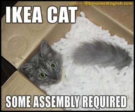 Name:  funny-cat-swimmingin-styro.jpg Views: 69 Size:  46.7 KB