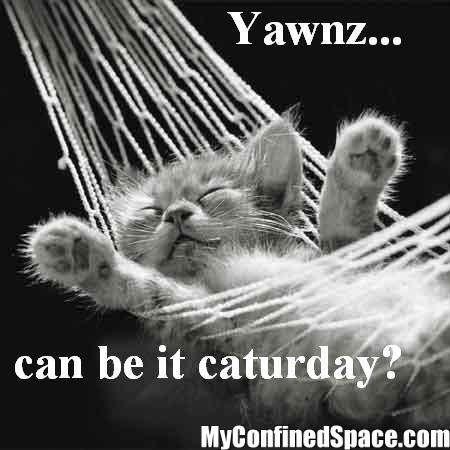 Name:  caturday-yet.jpg Views: 224 Size:  26.9 KB