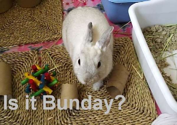 Name:  Bunday.jpg Views: 792 Size:  41.6 KB