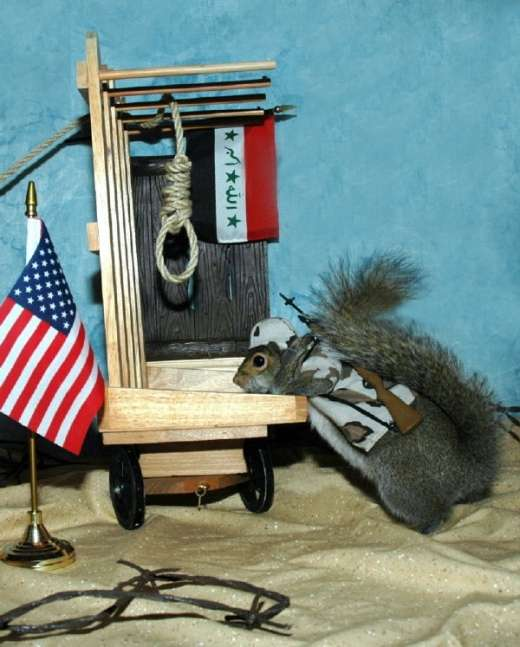 Name:  FunnySquirrelOutfits014.jpg Views: 309 Size:  41.9 KB