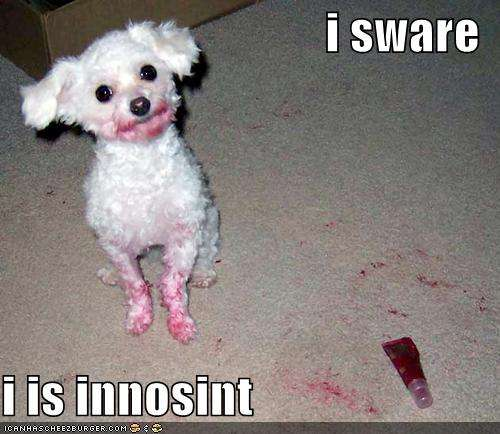 Name:  loldog-funny-pictures-innocent-dog.jpg