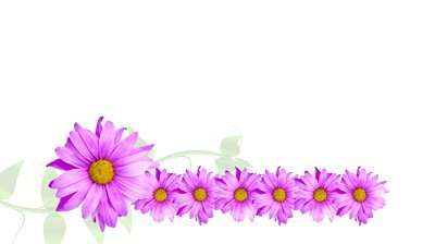 Name:  stock-footage-animated-border-of-purple-flowers-daisy-with-vine-growing-across-alpha-channel-inc.jpg