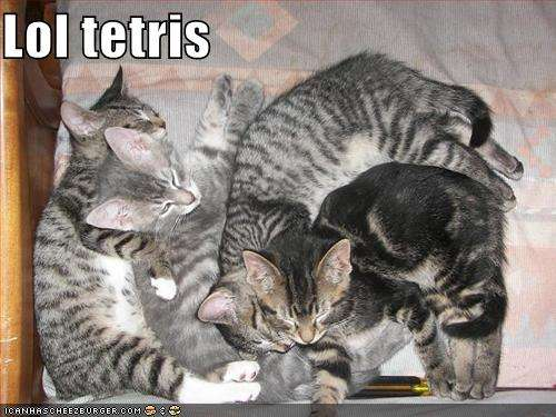 Name:  funny-pictures-kittens-lol-tetris.jpg Views: 291 Size:  36.7 KB