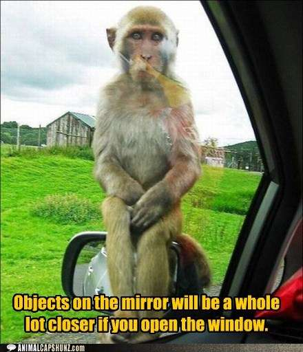 Name:  funny-animal-captions-this-is-the-warning-your-side-mirror-needs.jpg Views: 291 Size:  33.7 KB
