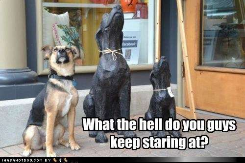 Name:  funny-dog-pictures-what-the-hell-do-you-guys-keep-staring-at.jpg Views: 273 Size:  29.0 KB