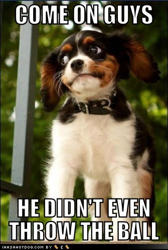 Name:  funny-dog-pictures-suspicious-goggie.png Views: 297 Size:  389.9 KB