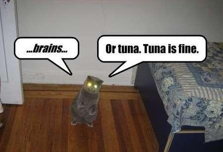 Name:  catlol-cat-wants-brains-or-tuna2.jpg Views: 273 Size:  14.5 KB