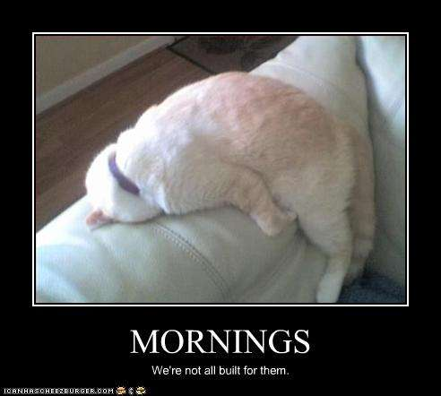 Name:  funny-pictures-cat-hates-mornings.jpg Views: 255 Size:  17.2 KB