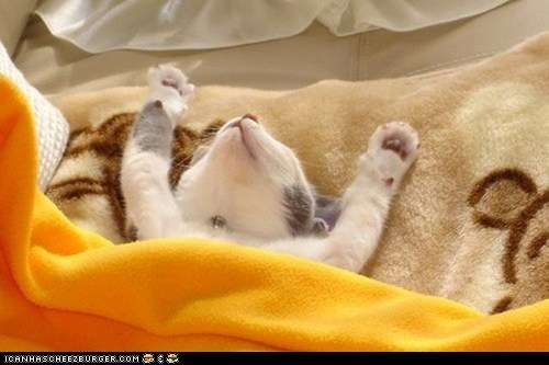 Name:  funny-pictures-cyoot-kitteh-of-teh-day-hooray-its-caturday.jpg Views: 79 Size:  19.8 KB