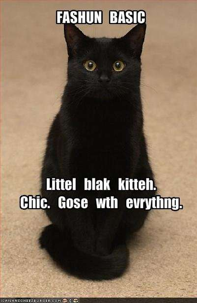 Name:  funny-pictures-a-little-black-cat-goes-with-everything.jpg