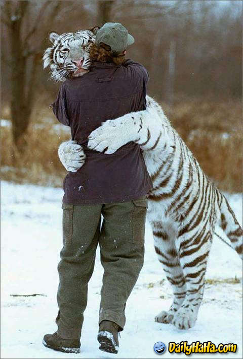 Name:  tiger_hugging_man_.jpg