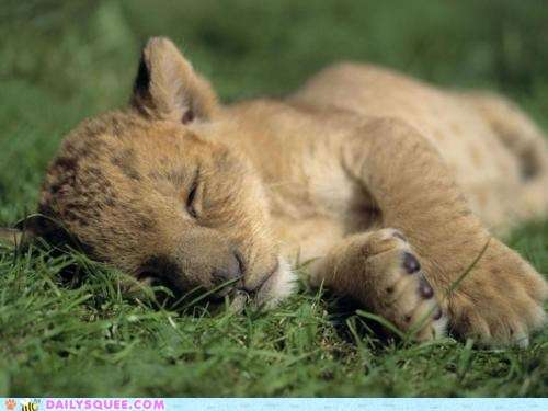 Name:  cute-animals-sweet-sleeper.jpg