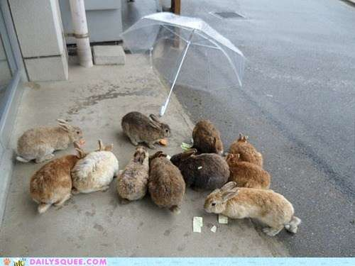 Name:  82b38_cute-animals-bunday-rainy-day-rabbits.jpg