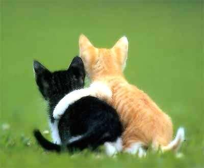 Name:  cats.jpg Views: 279 Size:  8.8 KB
