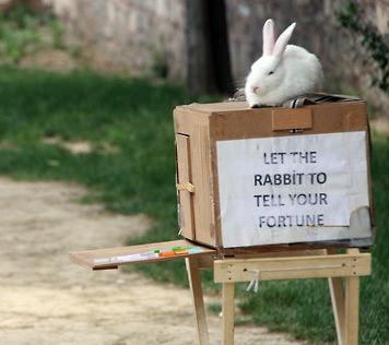 Name:  BunnyFunny265.jpg Views: 227 Size:  34.9 KB