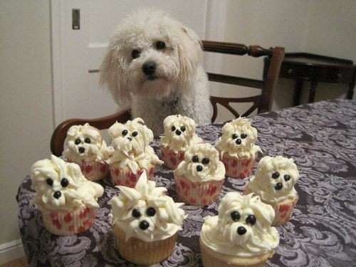 Name:  Pupcakes.jpg