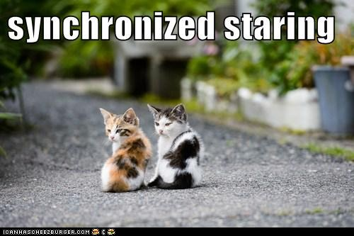 Name:  funny-cat-pictures-synchronized-staring.jpg