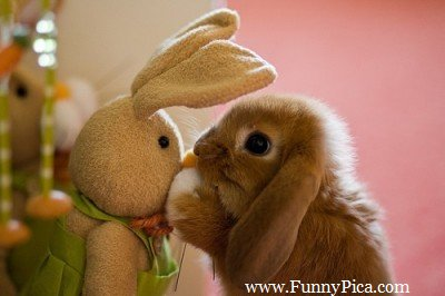 Name:  Funny-Cute-Rabbits-Funny-Cute-Rabbit-Picture-054-FunnyPica.com_.jpg Views: 142 Size:  21.2 KB