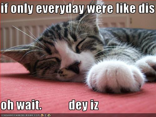 Name:  funny-pictures-lazy-cat-naps.jpg Views: 1338 Size:  36.5 KB